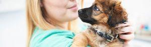 Puppy with vet,