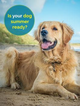 Dog summer ready, Rees